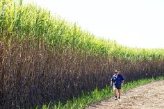 Carmilla sugar cane farmer Russell Thompson inspects his crop. Sugar is one of the major industries for northern parts of the Capricornia electorate, Queensland. Crop Farming, Farm Business, Border Plants, Country Scenes, Great Barrier Reef, Beautiful Beaches, Wonderful Places, Farmer, Family Photos