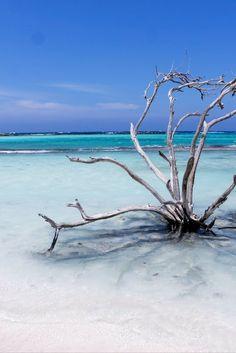 Der Baby Beach Aruba ist ein Strand wie aus dem Bilderbuch: Weißer Sand, türkisblaues Wasser und eine bunte Unterwasserwelt