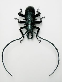 New Green Beetle 001   Flickr - Photo Sharing!
