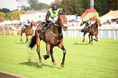 Champion Legal Eagle makes it look easy