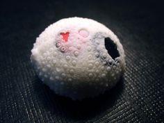 IRENE G BARRERA-ES-Ruido de sal y huesos (2) | Flickr: Intercambio de fotos