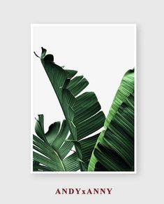 Set of 3 Banana Leaf Prints, Digital Download Print, Tropical Print Set, Printable Sets, Set of 3 Print, Succulent Print, Set of 3 wall art ----------------------------------------------------------------------------------------------------- Welcome to ANDYxANNY Accept all major credit