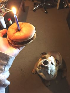 It's my dogs birthday - Imgur