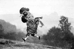 chicken run.