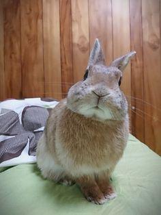 #cute #bunny #adorable