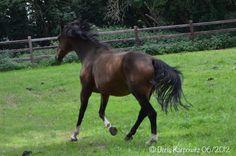 """""""Frag' mich nach der Poesie in der Bewegung, Schönheit, Intelligenz und Kraft, und ich zeige dir ein Pferd.""""   - unbekannter Verfasser –  """"Ask me about the poetry in motion, beauty, intelligence and strength, and I'll show you a horse.""""  - Unknown authors -"""