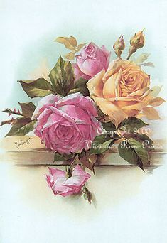 "(Original as re-pinned) ""Cabbage Roses"" - Paul de Longpre"