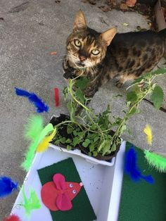 DIY Catnip Garden Tutorial - step by step photos and instructions to surprise your kitty!