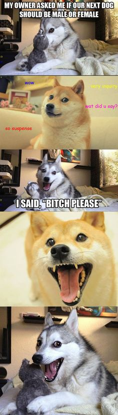 Joking with Doge