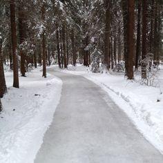 """""""E glatti Sach"""" - Skateline Albula, 3km Eisweg durch verschneiten Wald. #Erlebis und #fun"""