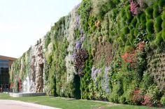 Green Envy: World's Longest Vertical Garden    #NewHomesForSaleAustin