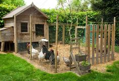 Chicken Coop Plans Free 34480753386111295 - gardens with chickens ~ gardens with chickens + gardens with chickens ideas + chickens and gardens + gardens for chickens + chickens and gardens ideas + hens and chickens plants ideas gardens Source by Chicken Coop Plans Free, Small Chicken Coops, Chicken Coup, Chicken Coop Designs, Backyard Chicken Coops, Chicken Runs, Chickens Backyard, Keeping Chickens, Raising Chickens
