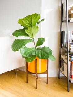 "Medium Mid-century Modern Walnut & Brass Planter, Plant Stand with 10"" Orange Ceramic"