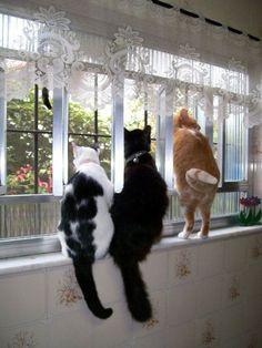 Gatos na janela