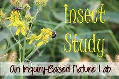 My 2nd grader enjoyed an inquiry-based insect study with nature as his learning lab.  The post includes a great list of living literature, too.  Insect study is a great go-along or follow-up to wildflower study.