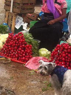 Hanak en el Mercado en San Cristobal de las Casas. ¿Quién nos acompaña?