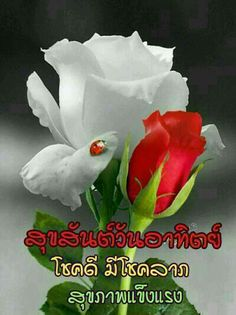 Say Hi, Happy Sunday, Good Morning, Quotes, Buen Dia, Quotations, Qoutes, Bonjour, Bom Dia