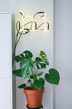 Neon sign art is the latest wall decor trend for those who are as obsessed with home design as we are. Take a look at these stunning neon signs! Yoga Studio Design, Belle Plante, Minimalist Room, Neon Lighting, Wall Signs, Home Deco, Home Interior Design, Planting Flowers, Wall Decor