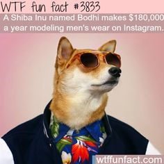 This dog make $180,000 a year modeling - WTF fun facts