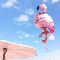Amina Mucciolo @studiomucci #Pink #flamingo p...Instagram photo   Websta (Webstagram)