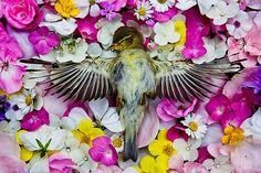 Maria Ionova-Gribina adorna la muerte de animales con flores que los hace parecer que están en un sueño profundo.