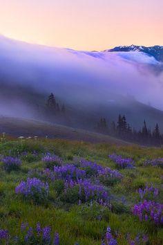 Nature / collines / montagnes / fleurs / violet / brume / vallée / crépuscule / pluiesnuhiriennes / vertforêt