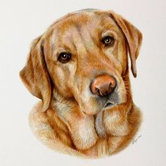If you'd like to book in,  please visit my website www.pencilportraitartist.co.uk