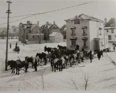 Moving a House with Horses, Winnipeg. Photographed by Lewis Benjamin Foote, 1915