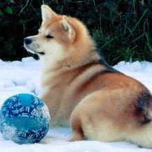 Mon chien au naturel | Primitif Addict - Education canine et Comportement canin