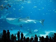 Georgia Aquarium in Atlanta, Georgia
