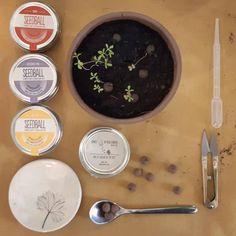 seedball - seedbomb - cosa sono, come si usano, istruzioni - R nel bosco Nigella, Action, Group Action