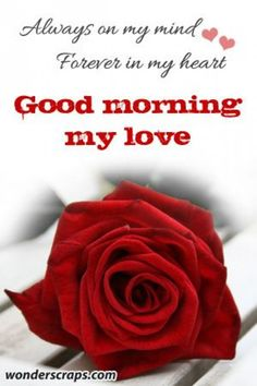183 Best Good morning my love images in 2018 | Good morning