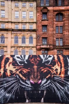 Discover Glasgow's Street Artists and their Best Murals - Klingatron & Art Pistol, Glasgow's Tiger   The Travel Tester - Self-Development through travel http://www.adventuresaroundscotland.com/scotland-travel-blog/glasgows-street-art-part-2