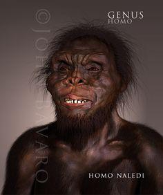 Homo naledi, Human Lineage-The Paleoanthropological Art  John Bavaro