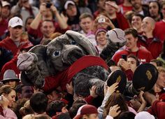 TUSCALOOSA, AL - NOVEMBER 29:  Mascot Big Al of the Alabama Crimson Tide crowd surfs from the field to the upper deck while taking on the Auburn Tigers at Bryant-Denny Stadium on November 29, 2008 in Tuscaloosa, Alabama. Alabama defeated Auburn 36-0.  (Ph
