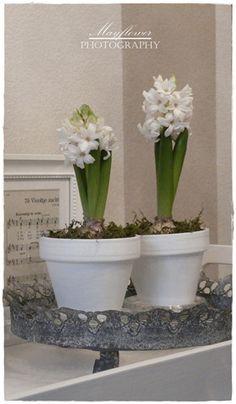 witte hyacinten in een wit bloempotje. Simpel maar mooi
