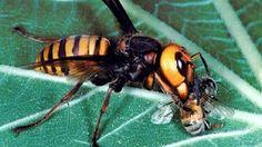 Cinco animales mortíferos de los que no habías oído hablar http://w.abc.es/27zmky