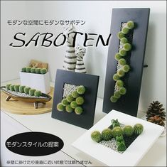 Rakuten: A houseplant interior modern cactus wave (white or black wave type) [easy ギフ _ Messe input] [message card free of charge] [stylish in modishness!]- Shopping Japanese products from Japan Succulent Gardening, Succulent Pots, Cacti And Succulents, Planting Succulents, Cactus Plants, Container Gardening, Gardening Zones, Wall Plant Hanger, Plant Wall