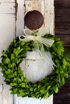 """8"""" Preserved Round Boxwood Wreaths with Ribbon"""