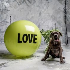 3 foot Big Love Ball with Judah | Color : Sprout | Photo by Bob Garlick
