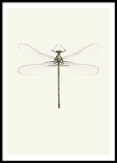 Posters och prints med insekter och djur | Tavlor med fjärilar och trollsländor…