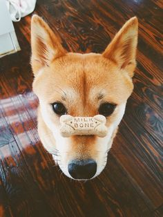 Not to many dogs have this much patience! Cute Creatures, Beautiful Creatures, Animals Beautiful, Chien Shiba Inu, Cute Puppies, Dogs And Puppies, Animals And Pets, Cute Animals, Pet Dogs
