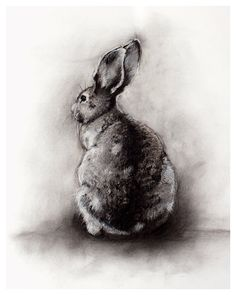 rabbit art print 8x10 from charcoal sketch by TheHauntedHollowTree