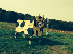 Cow out of nowhere!!!! Pumpkin patch #fun