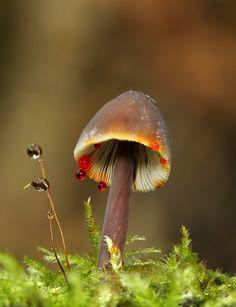 Mushroom by Cassilda Dias