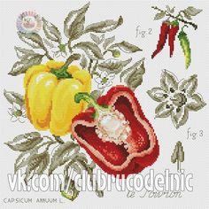 Vegetables - Chilies - Etude botanique - Véronique Enginger