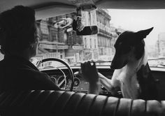 © Alfred Eisenstaedt, Woman taxi driver with her pet dog, París, 1963
