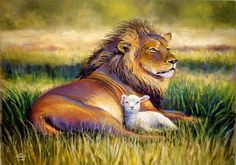 lion and lamb protected