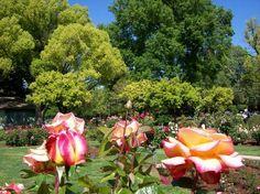McKinley Park Rose Gardens, East Sacramento Homes
