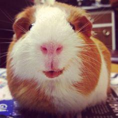 Smiley pig!